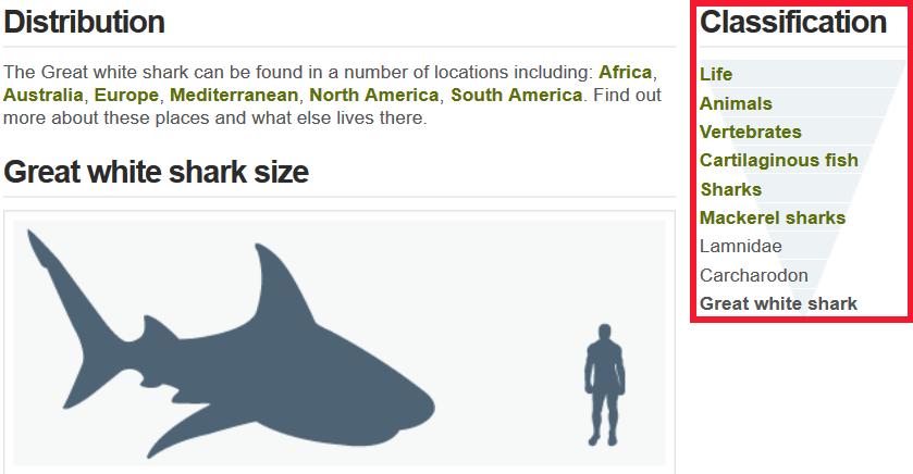 Catégorisation du Grand Requin Blanc